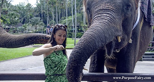 Feeding the Elephant