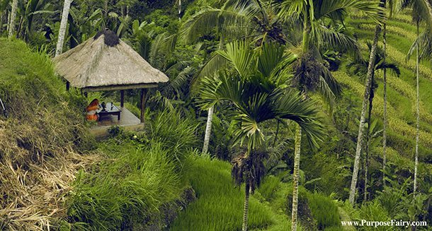 Beautiful rice Terrace in Ubud