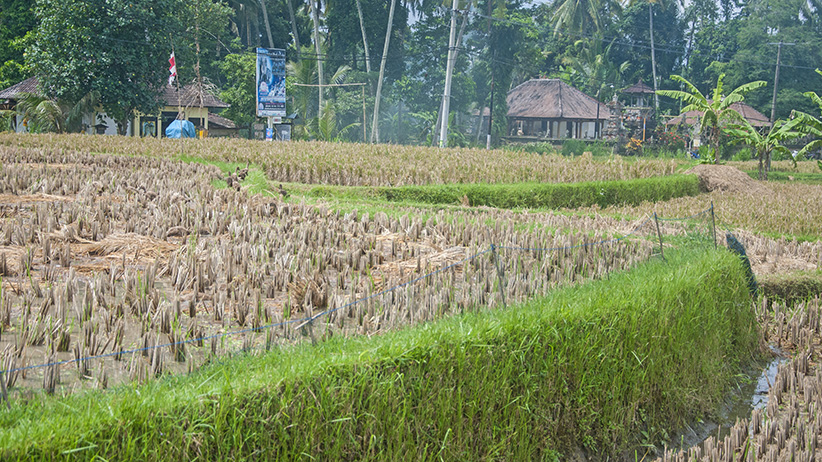 Asia Travels – The Beauty of Bali, Indonesia32