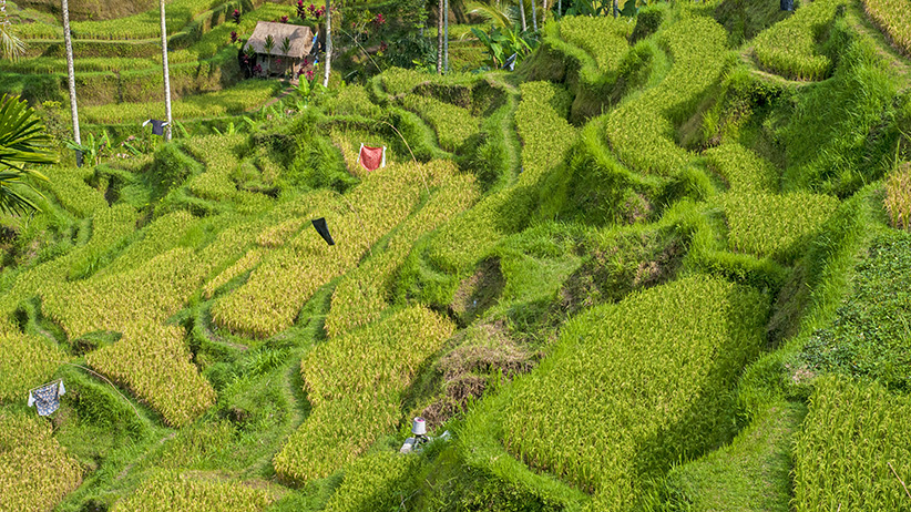 Asia Travels – The Beauty of Bali, Indonesia41