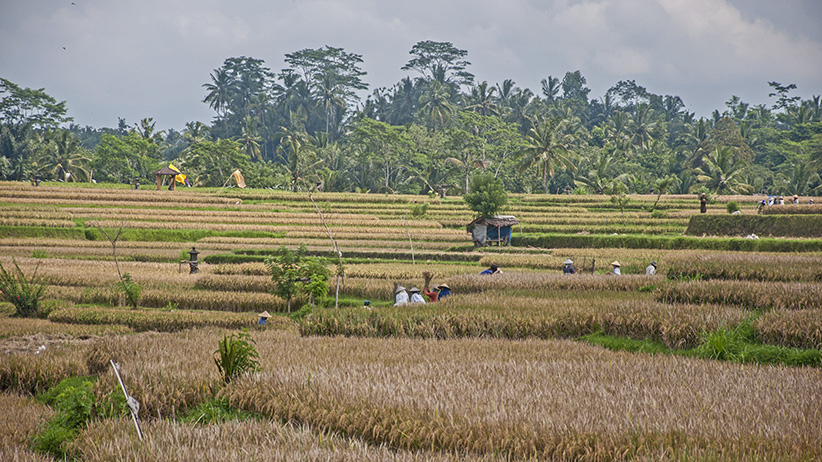Asia Travels – The Beauty of Bali, Indonesia43