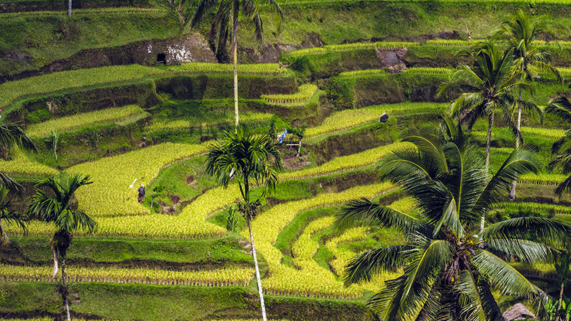 Asia Travels – The Beauty of Bali, Indonesia5