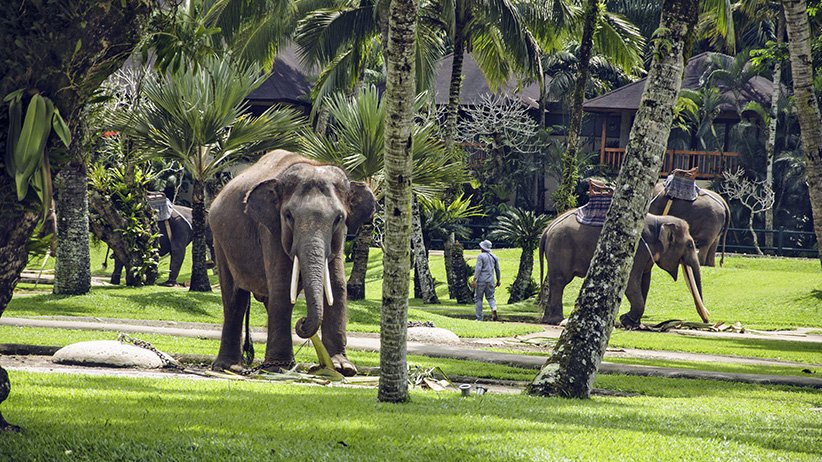 Asia Travels – The Beauty of Bali, Indonesia6