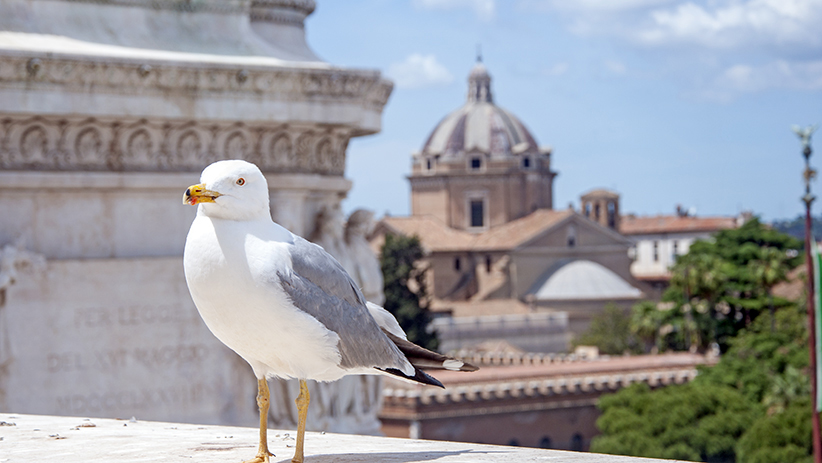 Rome Photos- 50 Photographs to Inspire You to Visit Rome, Italy3